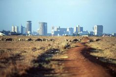 Visit Nairobi national park in Kenya but I think it's quite dangerous there