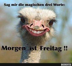Sag mir die magischen drei Worte.. | DEBESTE.de, Lustige Bilder, Sprüche, Witze und Videos
