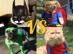 #SuperHeroDay: Which is your fave?