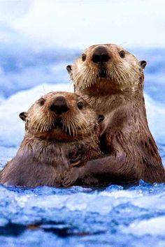 просто животные – Сообщество – Google+