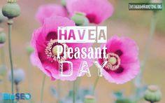 #pleasantday #poppies #niceday #haveaniceday #poppy # Instagram @martinhosner #followme