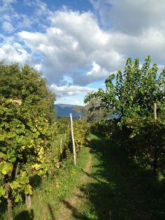 Ottobre 2015, una passeggiata tra le viti. #vigneto #ConeglianoValdobbiadene #Natura #uva #Veneto #living