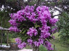 Como Cultivar Orquideas En Troncos | Cómo plantar orquídeas en los árboles | cuidatujardin.com