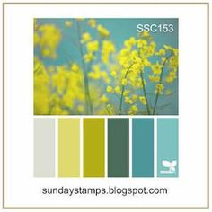 Stampin' Up! Colorful Seasons for Sunday Stamps – Stamp With Amy K