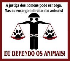 EU CUIDO, PROTEJO E AMO MTO!! E VC? ❤️❤️ #cachorro #gato #amoanimais #amorincondicional #maedepet #filhode4patas