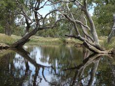 Wagga River