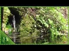3 HORAS com Sons da Natureza Água Pássaros HD para Relaxar e Meditação - YouTube