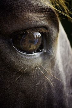 by Ken Gehring - Animals Horses ( ken gehring photography, reflection, arkansas photographer, horse, eyes )