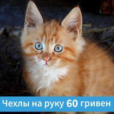 Только у Котяры чехлы для смартфонов на руку по 60 гривен ;) Cats, Animals, Gatos, Animaux, Animales, Cat, Kitty, Animal, Dieren