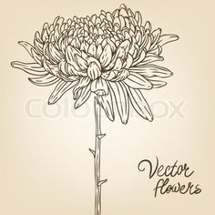 Vintage hand-drawing background with flowers