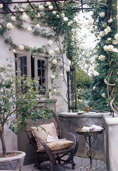 Beautiful white rose vine.