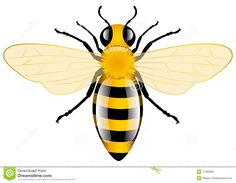 Honey Bee Stock Image - Image: 17482981