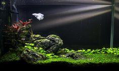 Aww Yiss Fish : Photo