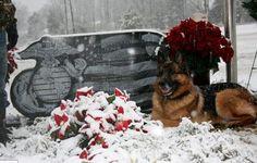 #military #dog #veteran