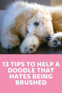 You Doodle, Doodle Dog, Goldendoodle Grooming, Red Goldendoodle, Goldendoodle Haircuts, Poodle Grooming, Matted Dog Hair, Dog Grooming Tips, Pet Tips