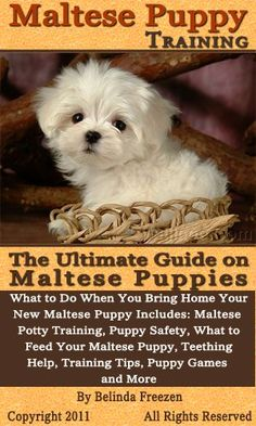Pupy Training Treats Pupy Training Treats - Click visit site and Check out Cool Maltese T-shirts. This website is excellent. Tip: You can search your name or your favorite shirts at search bar on the top. - How to train a puppy? - How to train a puppy? Teacup Maltese, Maltese Dogs, Dog Training Books, Dog Training Tips, Agility Training, Dog Agility, Yorkshire Terrier Puppies, Maltipoo, Puppy Care