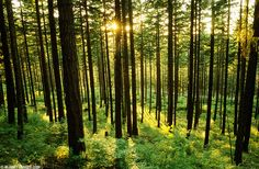 kinds of trees in rural WI - Google Search