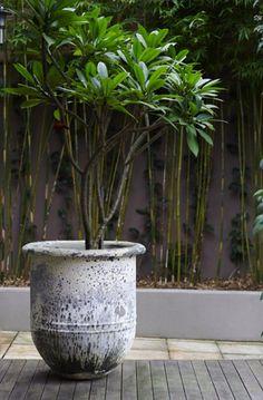 frangipani garden design ideas - Internal Home Design Terrace Garden, Garden Pots, Outdoor Plants, Outdoor Gardens, Potted Trees Patio, Potted Plants, Plumeria Tree, Balinese Garden, Tropical Garden Design