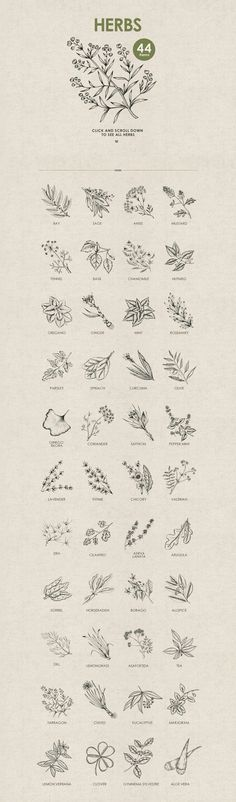 Bullet journal drawing idea, flower doodles, botanical doodles.