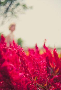 RED 2 by aleckc, via Flickr