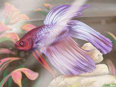 How to Grow a Bond With Your Betta Fish: 11 Steps (with Pictures)