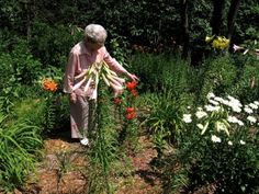 Gardens For Senior Citizens: Creating An Easy Care Senior Garden - A lifelong love of gardening should not have to end as mobility and other issues arise in seniors. Nurseries and garden centers are heeding the special needs of older gardeners. This article can help too.