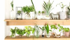 Water Flowers, Water Plants, Garden Plants, Room With Plants, Green Life, Aquaponics, Houseplants, Floating Shelves, Planting Flowers