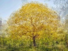 Photomontages of Trees Appear Like Impressionist Paintings - My Modern Metropolis