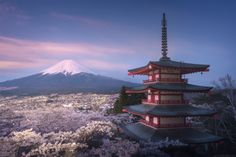 Fuji! - In the morning we met amazing sunrise over fully-blooming sakura garden under Chureito pagoda with a perfect view towards Mt Fuji. Tomorrow is the last day of my photo-workshop in Japan. I am leaving my group in the airport and flying to New Zealand, to start my South Island workshop. Don't forget that I have just a few spots left to the sailing photography trip in Greenland with amazing team of arctic sailorsm you are welcome to sign in on last vacant spots: <a…