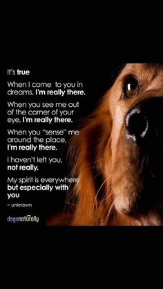 Pet Loss Quotes, Dog Quotes, Animal Quotes, Dog Grief, Pet Loss Grief, Pet Dogs, Dog Cat, Chihuahua Dogs, Animals And Pets
