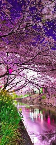 Mohamed Magdy originally shared to Earth (► Pictures of Nature): ♥ Cherry Blossom River, Kyoto, Japan ♥ On G+ Places Around The World, Around The Worlds, Beautiful World, Beautiful Places, Wonderful Places, Beautiful Moments, Simply Beautiful, Amazing Places, Romantic Places