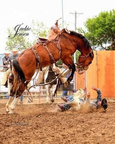 At The Mile City Montana Bucking Horse Sale Photo