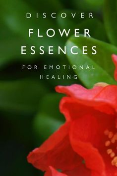 Free flower essence video training: Enter your email to get free access to 4 training videos. Imagine a plant remedy that helps you unleash creativity, heal from heartbreak, or dissolve anxiety and stress. Flower essences bring healing and balance when you feel stuck in old or unhealthy patterns. Discover how this subtle form of plant medicine can activate your mind's healing power to stimulate personal growth in this free video series with Sara Crow L.Ac.