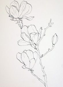 Drawing Pink Magnolia flowers - Pen and Ink plus Watercolor Wash