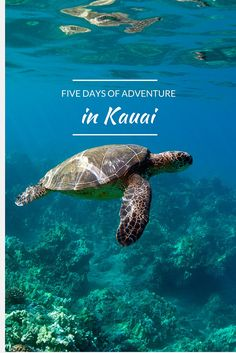 Honeymoon Hotspot: Kauai, Hawaii - Kauai is the perfect romantic destination for outdoor enthusiasts. This 5-day itinerary explores all the cool things to do in this lush locale.