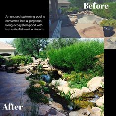 Building A Backyard Pond By Converting Your Swimming Pool Swimming Pools Pond And Backyard