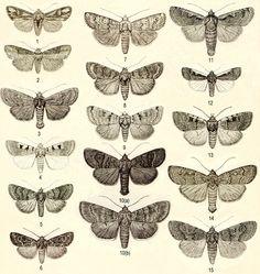 #moth #illustration
