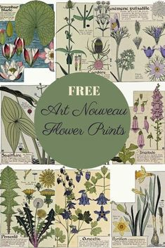 A beautiful collection of copy right free Art Nouveau flower prints to download.  These floral illustrations are by the French artist Maurice Verneuil.  #artnouveau #flowerart Fleurs Art Nouveau, Art Nouveau Flowers, Botanical Drawings, Botanical Prints, Anemone Flower, Flower Art, Illustration Blume, Art Nouveau Illustration, Nature Illustration