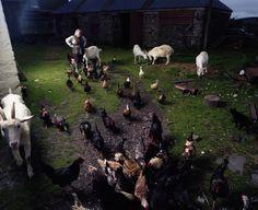 'Animal Farm' from the audio slide installation 'Tula Fancies', Mark Neville, 2008