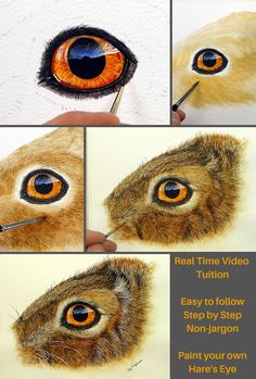 A real time video tutorial, fully narrated by myself as I have undertaken the project. Available to all my members in my online school. Every project I have is available and there are now a significant number in the back catalogue. Watercolor Flowers Tutorial, Watercolor Video, Watercolour Tutorials, Watercolor Artists, Painting Tutorials, Watercolour Painting, Art Tutorials, Drawing Animals, Animal Drawings