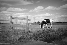 landschap. zwart/ wit fotografie
