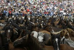 Wild horses are seen gathered during the Rapa Das Bestas traditional event in the Spanish northwestern village of Sabucedo July 7, 2012. (Miguel Vidal/Reuters)