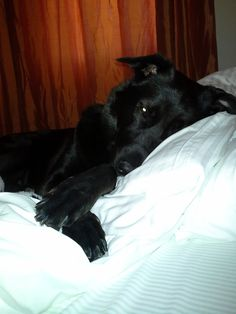 Levi... fresh white bedlinen... nice and comfy!