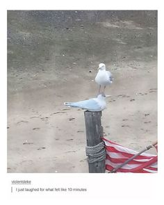 #1 This seagull standing on another seagull#2 His eyebrows slipped down his face.#3 Your face on your suitcase#4 Good and naughty penguin of the month#5 New level of Netflix and chill#6 Portal#7 Smuggling watermelon#8 A bottle of wine under a subway seat#9 Funny...