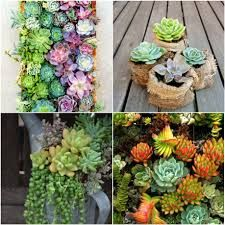 Image result for indigenous gardens south africa