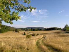 szlak w stronę Przełęczy Lądeckiej, po zejściu z Góry Borówkowej