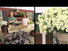 ▶ How To Plant A Surfinia Petunia Combination Planter - YouTube
