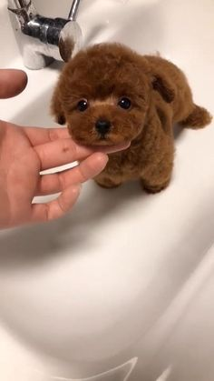 Cute Baby Puppies, Super Cute Puppies, Baby Animals Super Cute, Cute Wild Animals, Baby Animals Pictures, Cute Animal Photos, Cute Little Animals, Cute Animal Pictures, Cute Teacup Puppies