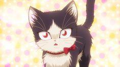 Gato Anime, Anime Cat, Anime Manga, Anime Animals, Cute Animals, Romance, Roommate, Anime Shows, Fantasy Creatures