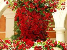 don juan climbing rose   Red Climbing Rose, Best Climbing Red Roses, Climbing Roses Rambling ...